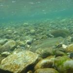 Quinsam River Salmon Hatchery.jpg