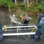 Campbell River Salmon Fishery.jpg