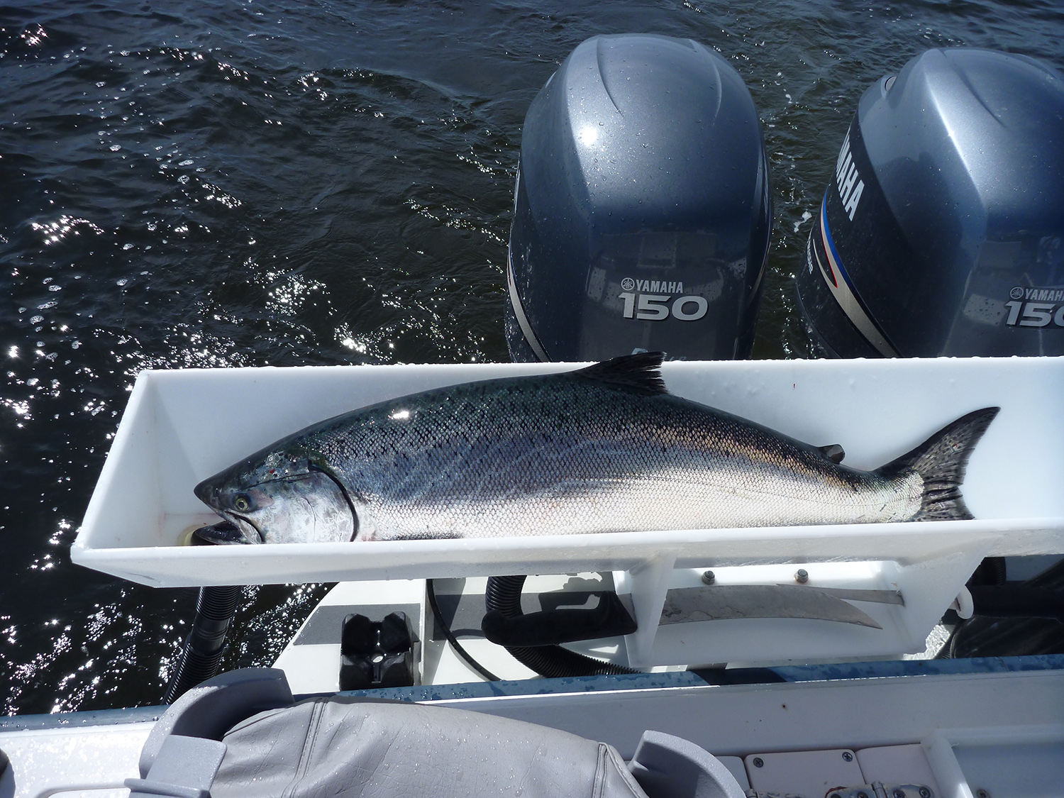 Campbell river gold river guided charter fishing boats for Fish cleaning board