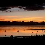 Profish Adventures Campbell River image001 (12).jpg