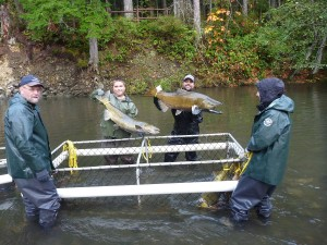 Campbell River Salmon Fishery