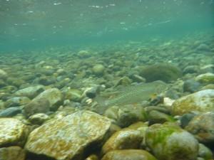 Quinsam River Salmon Hatchery